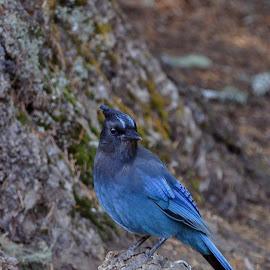 by Jacquie Wooten - Animals Birds