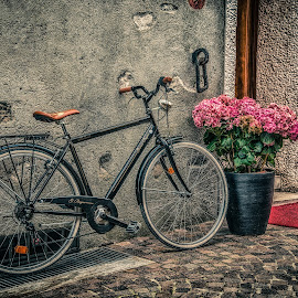 Vintage bicycle by Dobrinovphotography Dobrinov - Transportation Bicycles ( old, wheel, cycling, street, land vehicle, rusty, travel, ivy, transportation, spoke, weathered, bicycle, decor, retro revival, metal, dirty, nostalgia, mode of transport, black, flower, classic, bicycle pedal, cycle, leaning, decoration, backgrounds, old-fashioned, city life, fashioned, past, urban scene, outdoors, basket, day, vignette, lifestyles, wall )