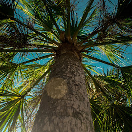 by Aires Spaethe - Nature Up Close Trees & Bushes ( canon, palm tree, sun glare, florida, tropic, ocean )