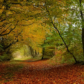 Woodland walkway by Mike Hawkwind - Novices Only Landscapes ( orange, scotland, uk, autum, trees, yellow, landscape, leaves, woods )