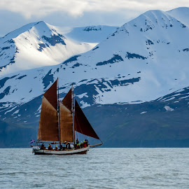 Sail Boat by Katrina Olafson - Transportation Boats ( water, glacier, iceland, 2014, snow, sailboat, boat, ice caps )