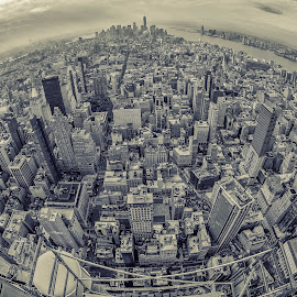 From the empire state building by Rolf Crisovan - City,  Street & Park  Skylines ( new york skyline, skyscraper, new york city, new york, usa )