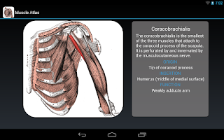 Screenshot of Anatomy: Atlas of Muscles