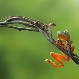 where ya goin' ? by Andri Priyadi - Animals Amphibians ( lizard, macro, frog, indonesia, amphibian, nikon )