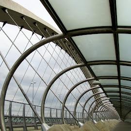 Puente del Tercer Milenio by João Ascenso - Buildings & Architecture Bridges & Suspended Structures ( zaragoza, bridge )