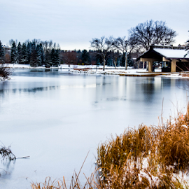 The First Snow  by Joseph Law - News & Events Weather & Storms ( hawrelak park, cold, city recreation centre, bushes, first snow, trees, reflections, edmonton )