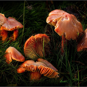 by Stephen Hooton - Nature Up Close Mushrooms & Fungi ( scotland, fungai, places )