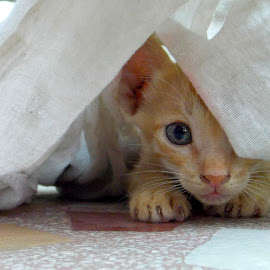 Hide n Seek ♥ by Ajinkya Bhonde - Animals - Cats Playing ( cat, kitten, meow, cute cat, hide n seek, kittens, animal )