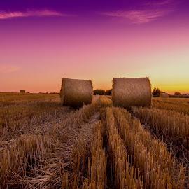 Autumn harvest  by Chris Barnes - Landscapes Prairies, Meadows & Fields ( canon, 550d, autumn, sunset, oxfordshire, harvest, evening )