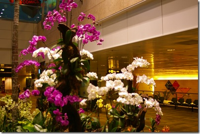 The orchid garden inside the changai airport terminal singapore