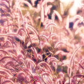 by Prachit Punyapor - Nature Up Close Leaves & Grasses