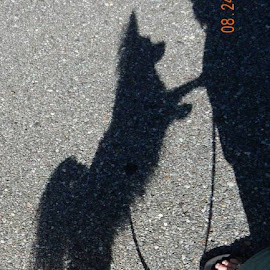 Shadow Dog by Virginia Lane - Animals - Dogs Playing