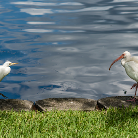 by Jake Easton - Animals Birds