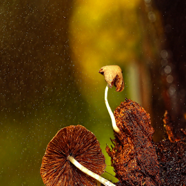 by Zulkifli Japar - Nature Up Close Mushrooms & Fungi
