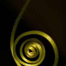 Coiled Cucumber Vine by Rhonda Musgrove - Nature Up Close Other plants ( cucumber, green, swirl, vine, twist, coil )