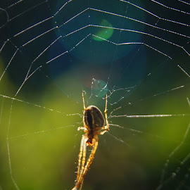 by Stefanie Hilgers - Nature Up Close Webs