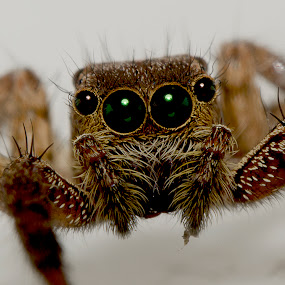 Spy by Eko Janu - Animals Insects & Spiders