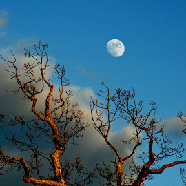 Moon by Benny Berget - Nature Up Close Other Natural Objects (  )