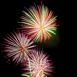 Flowers In The Sky by Steve Francis Quiatchon - Abstract Fire & Fireworks ( streaks, fireworks, festival, flowers, light )