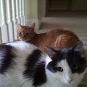 Best Kitty Friends