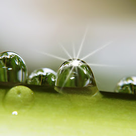 Cling by Sengkiu Pasaribu - Nature Up Close Natural Waterdrops