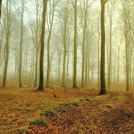 Rimtåge. by Ove Andersen - Landscapes Forests