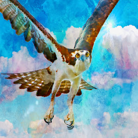 Portrait of an osprey by Sandy Scott - Digital Art Animals ( birds of prey, osprey baring talons, eye contact with an oprey, osprey art, raptors, photo art, osprey,  )