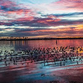 Free Bird by Karina Irene - Landscapes Waterscapes ( san diego sunset, san diego, bay, sunset, mission bay )