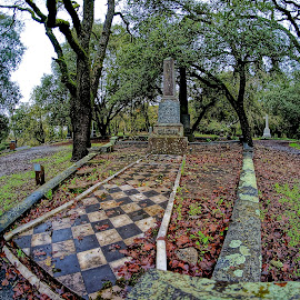 After the Rain by Barbara Brock - City,  Street & Park  Cemeteries ( tombstones, gravemarkers, cemetery, fish eye lens, graveyard )