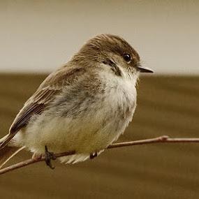 Seasonal Tenant by Stephen Beatty - Animals Birds