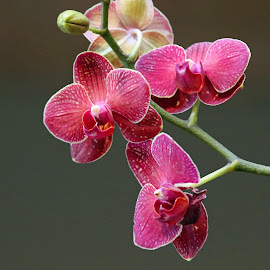 by Anthony Goldman - Nature Up Close Other plants ( orchid, nature, flower, botanical gardens )