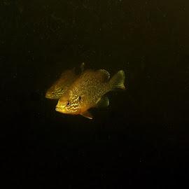by Milan Zurković - Animals Fish