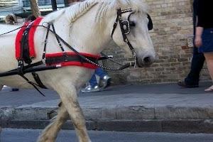 Screenshot of Horse - Pony Wallpaper