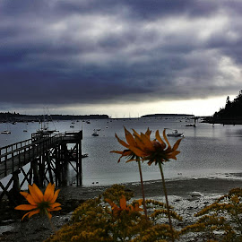 Harbor view by Michelle Agnese - Instagram & Mobile Android ( orange flowers and blue skies, harbor view )