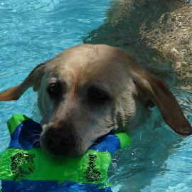 Boomer Celeberti by Sherri Hillman - Animals - Dogs Playing
