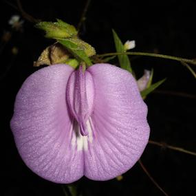 Morning Bloom by Jeannie Love - Flowers Single Flower ( nature, nature up close, bloom, morning, flower )