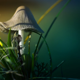 in forest by BO LED - Nature Up Close Mushrooms & Fungi ( mushroom, macro, nature, green,  )