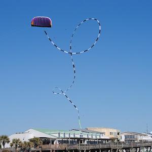 seagulls 068.JPG