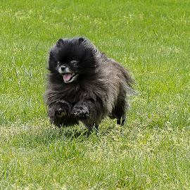 lucy by Jodi Olson - Animals - Dogs Running ( #GARYFONGPETS, #SHOWUSYOURPETS )