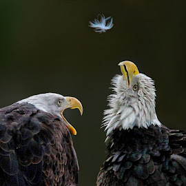Coughing Up Another Feather? by John Larson - Animals Birds