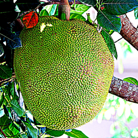 Jackfruit by Yusop Sulaiman - Nature Up Close Gardens & Produce