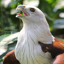by Saefull Regina - Animals Birds