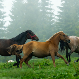 Liberty by Hamos Gyozo - Animals Horses