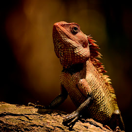 by Nani Garu - Animals Reptiles