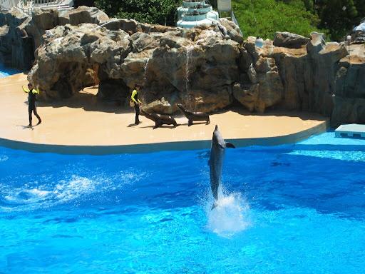 Delfiny dance