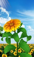 Screenshot of 3D Sun Flower Live Wallpaper