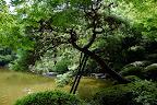 Tree support in Shizen Kyoiku Park