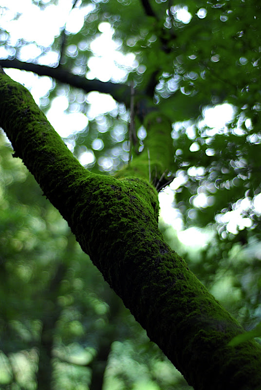 Moss grows heavily on a tree in Shizen Kyoikuen