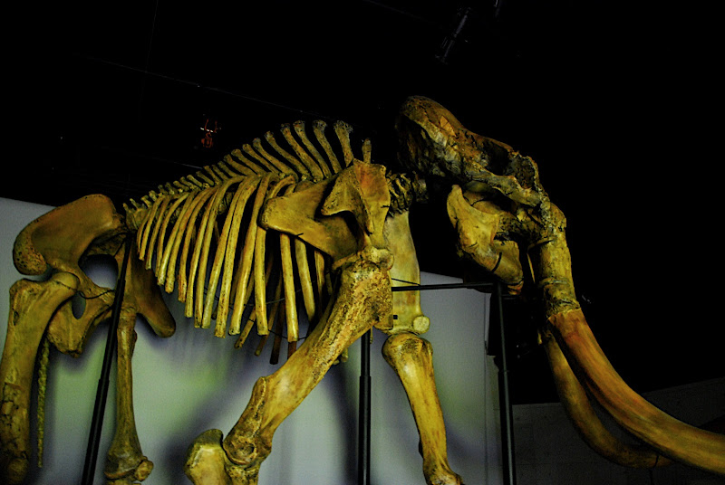The mammoth in fake bones