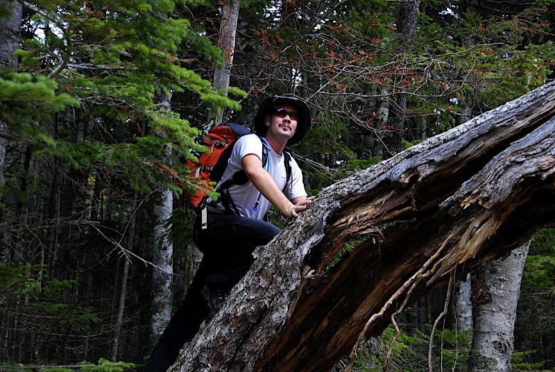 Jason attempts a tree climb in Yatsugatake